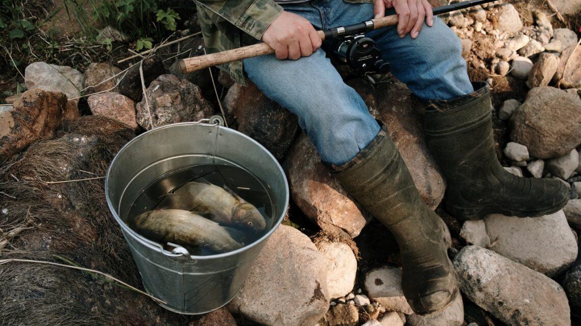 Er mit fisketegn gyldigt? Her får du svaret