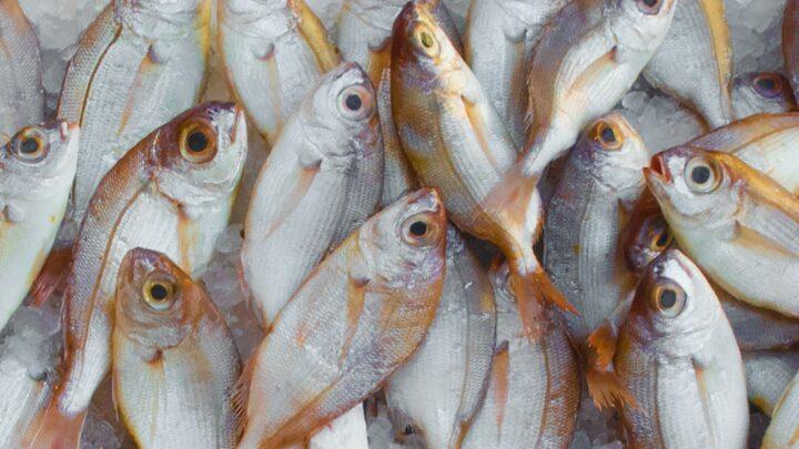 6 Gode fiskesteder rundt omkring i Danmark